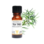 Amphora Tea Tree