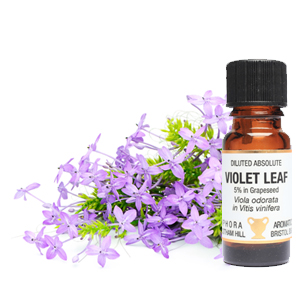Amphora violet leaf diluted